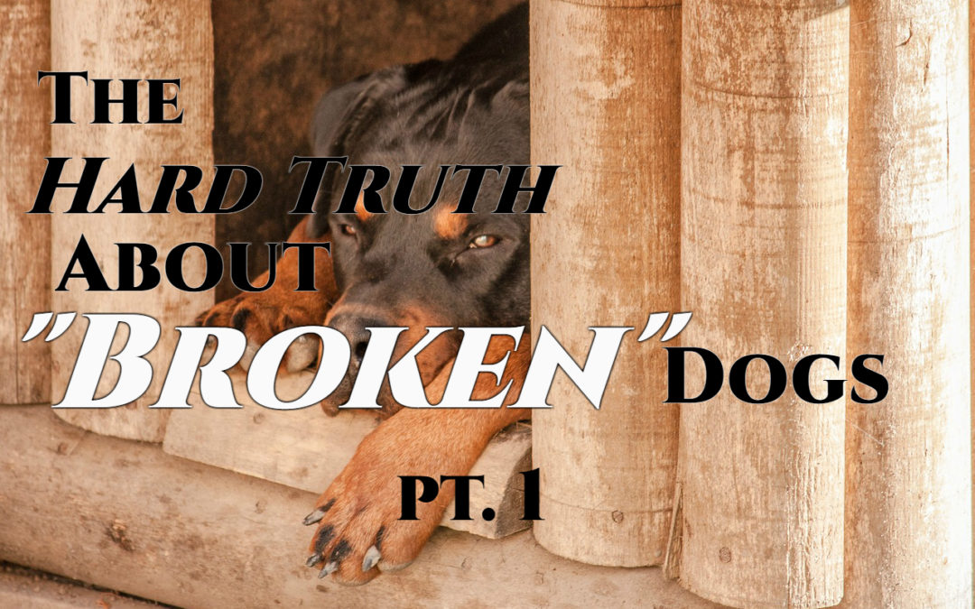 "The Hard Truth About ""Broken"" Dogs pt. 1"