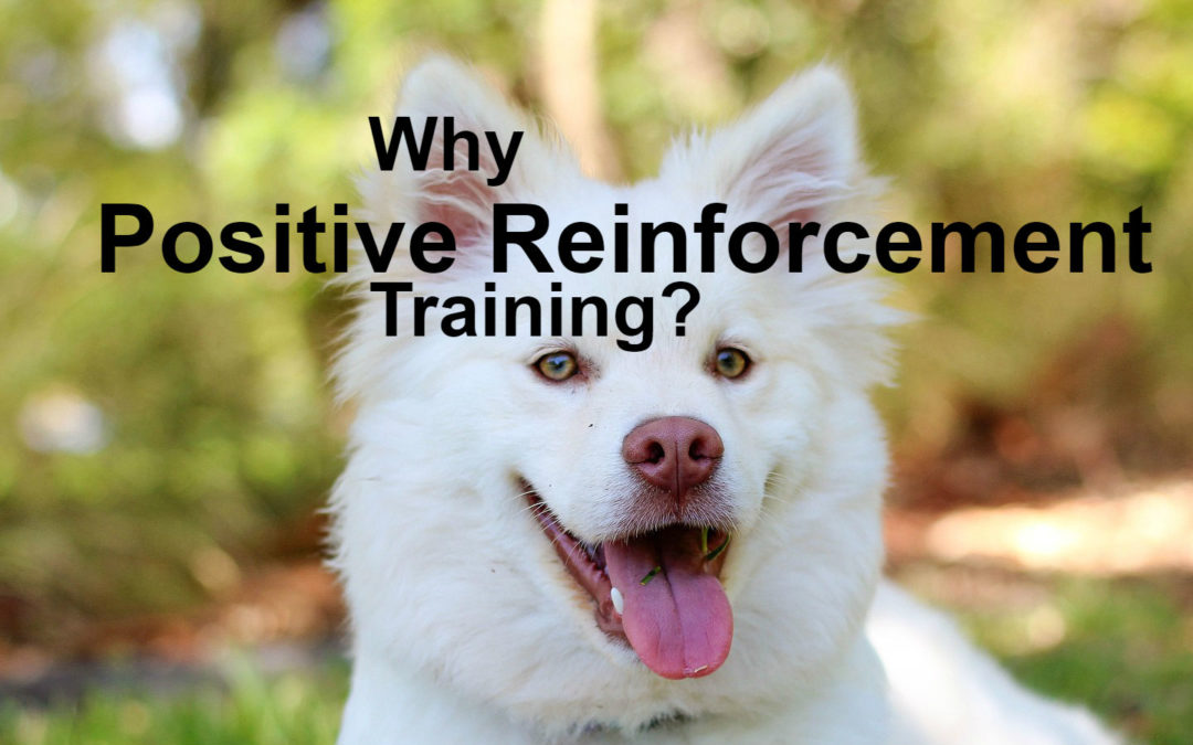 Why Positive Reinforcement?
